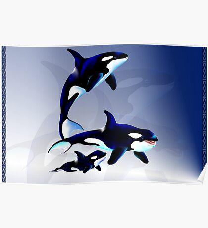 Killer Whale Family large Poster
