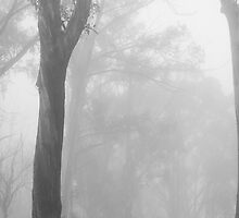 Through the fog - B&W by Will Hore-Lacy