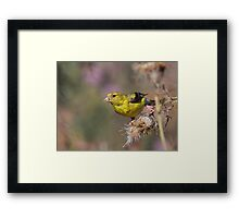 American Goldfinch on Thistle Framed Print