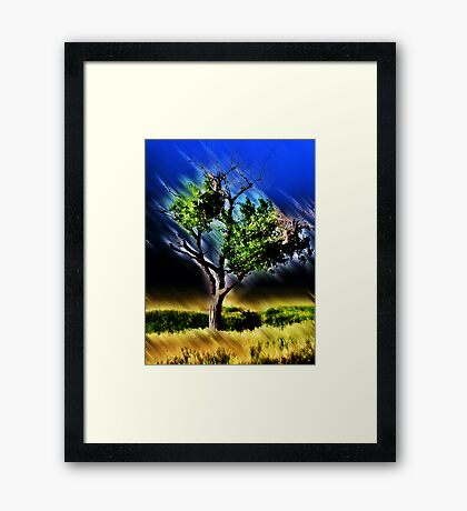texas tree Framed Print