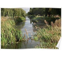 weeping willows and water Poster