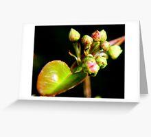 Pear Tree Buds Greeting Card
