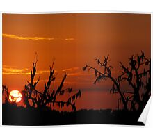 Spanish moss and sunsets Poster