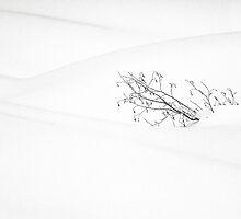 Bush In Snow by Chris Whitney