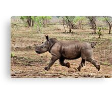 "*WHITE RHINOCEROS* - Ceratotherium simum - YES! I CAN DO IT ! (EVER SEEN A BABY RHINO... ""TAKE OFF"")   Canvas Print"