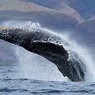 The Power and grace of a Humpback Whale by Michael S Nolan