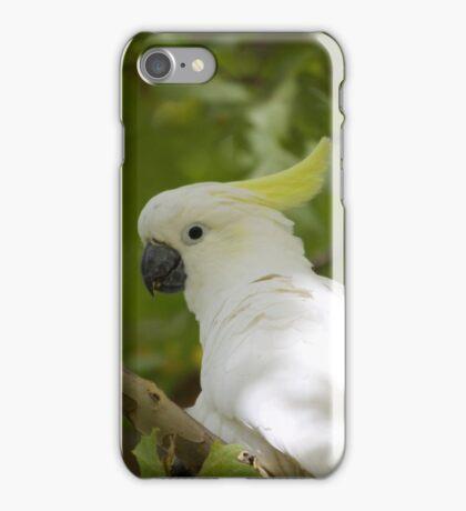 Sulfur Crested Cockatoo iPhone Case/Skin