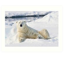 Curious polar bear Art Print