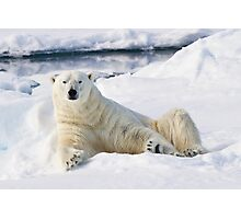 Curious polar bear Photographic Print