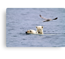 Swimming Ice Bear Mother and Cub Canvas Print