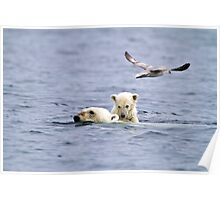 Swimming Ice Bear Mother and Cub Poster
