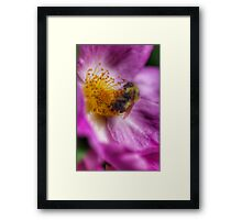 Free To Bee Framed Print