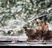 22.9.2010: Autumn in abandoned House by Petri Volanen