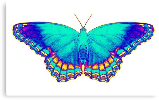 Colorful Butterfly by Jean Gregory  Evans