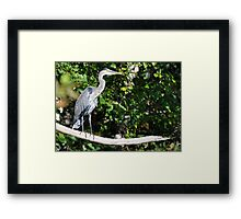 Favourite Perch Framed Print