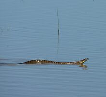 Tiger snake by elsha