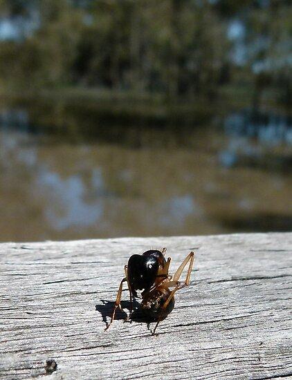 Ant Yoga by elsha