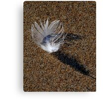 lonely feather Canvas Print