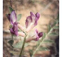 Delicate Flower Photographic Print