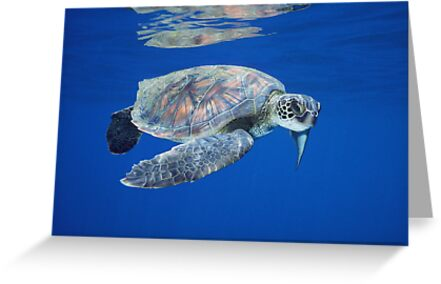 Reflections of a Turtle by Michael S Nolan