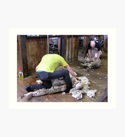 Shearing Art Print