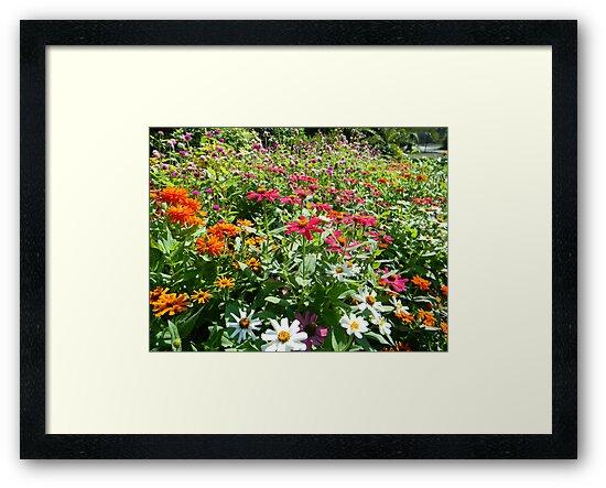 Summer flower garden by Éilis  Finnerty Warren