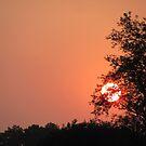 Soleil by Jennie L. Richards