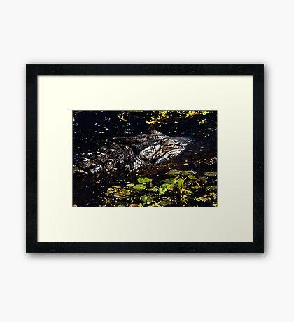 Sleeping Alligator Framed Print