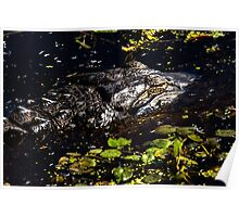 Sleeping Alligator Poster