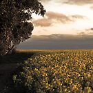 ~ Spring Has Sprung ~ by Jane Keats
