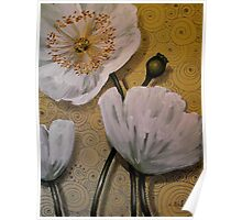 White Iceland Poppies Poster