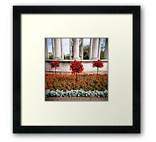 Three red bushes Framed Print