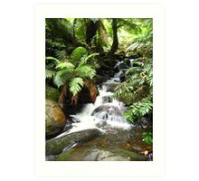 Cement Creek - Warburton, Victoria Art Print