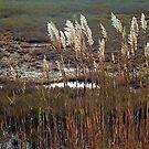 Les herbes Sunlit du marais by Littlehalfwings