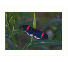 Red & Black Butterfly Art Print