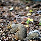 Minneapolis, MN: Found a Nut by ACImaging