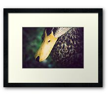 Bill Framed Print