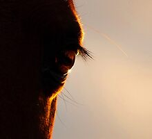 Eye see the sun go down. by Penny Kittel