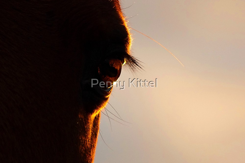 Eye see the sun go down. by Penny Kittel