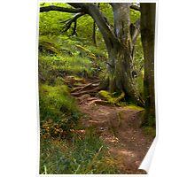 Northumberland Woodland Poster