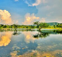 Reflections #2 by Prasad
