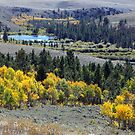 Aspen Gold at South Pass by A.M. Ruttle