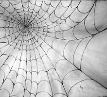 Web by Rachel Black