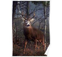 Buck on ridge portrait - White-tailed Deer Poster