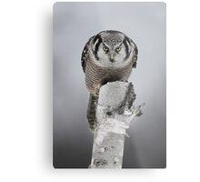 Hawk on log portrait - Northern Hawk Owl Metal Print