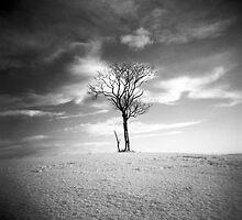Lone tree by Craig  Roberts