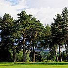  Tall Pines   Ballater Golf Course, Scotland. by Karen  Betts