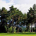 Tall Pines   Ballater Golf Course, Scotland. by Karen  Betts