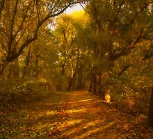 Fall in the Forest by Mick Burkey