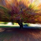 Autumn tree no1 by LAURANCE RICHARDSON